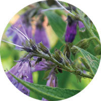 Load image into Gallery viewer, Comfrey Sigrid Naturals Ingredients