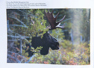 Moose Watcher's Handbook