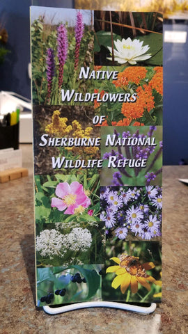 Native Wildflowers of Sherburne National Wildlife Refuge