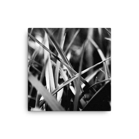 Macro photo of gras (black and white edition, 1:1)