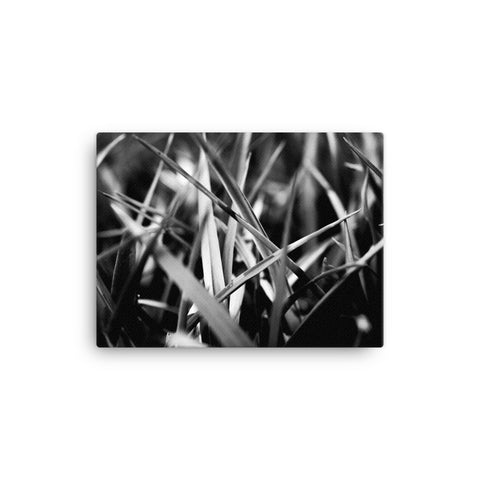 Macro photo of gras (black and white edition, 4:3)