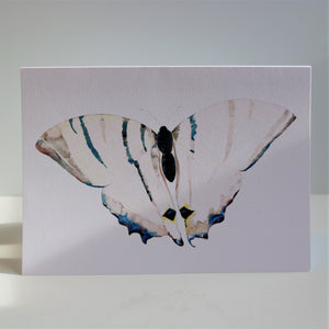 Butterflies of France Notecards by Heidy Sumei Chuang