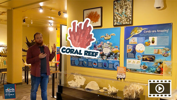 Virtual Tour: Coral Reef, Lego Lab & Nanotechnology