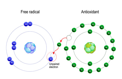 antioxidant donating an electron to a free radical