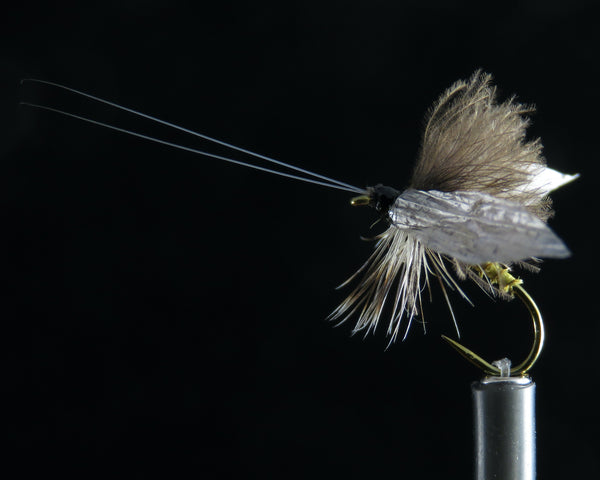 Wounded Adult Caddis olive