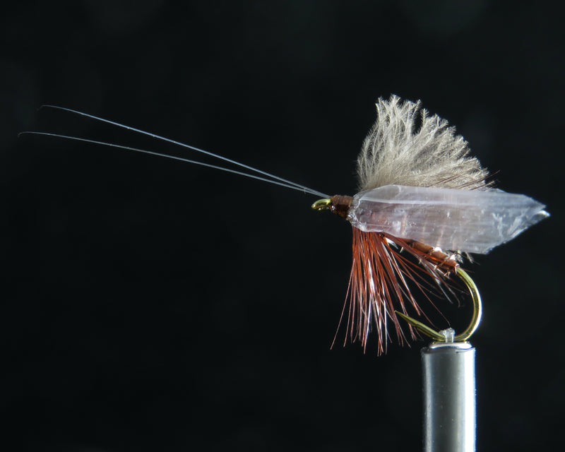 Wounded Adult Caddis cinnamon