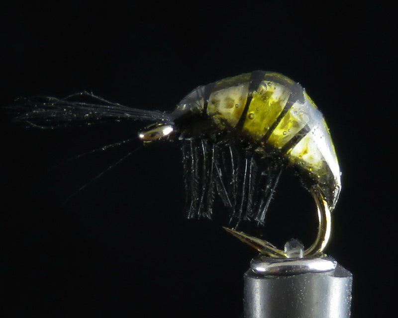River Shrimp olive