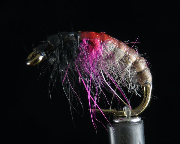 Czech Nymph Pink purple