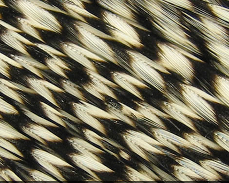 Microbarb Genetic Rooster Feathers