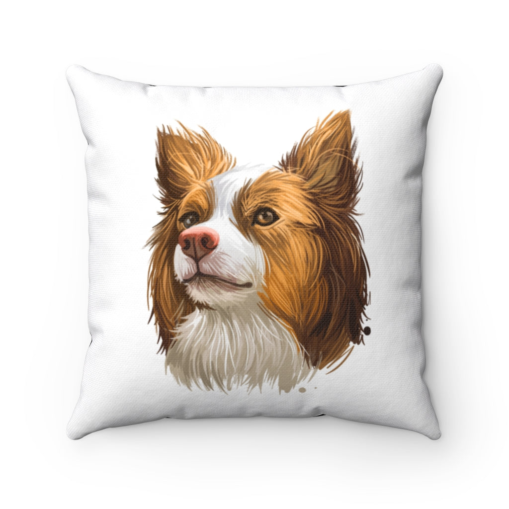 Portrait of Miniature American Shepherd