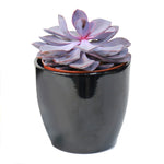 Echeverien Purple (30cm Height)