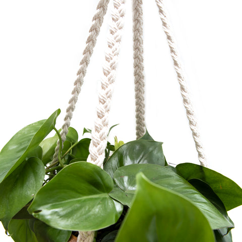 close-up of braids on plant hanger