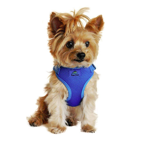 Doggie Design Wrap and Snap Choke Free Dog Harness Cobalt Blue on Dog