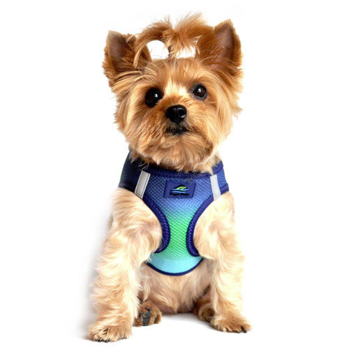 Doggie Design Ombre American River Choke Free Dog Harness — Northern Lights on Dog