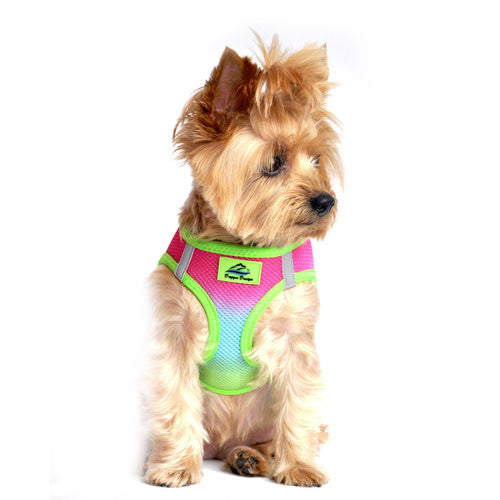 Doggie Design Ombre American River Choke Free Dog Harness — Rainbow on Dog