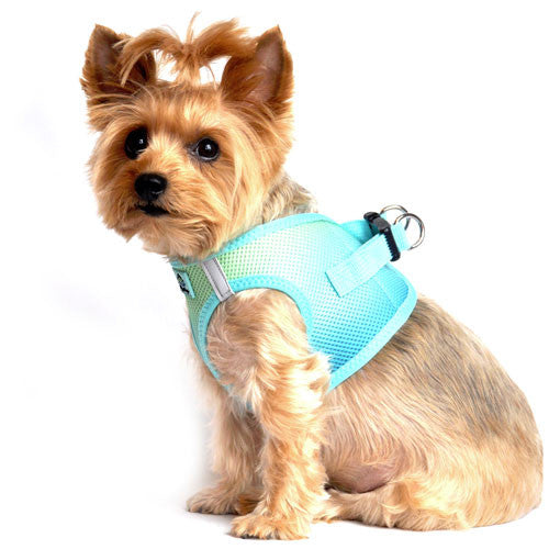 Doggie Design Ombre American River Choke Free Dog Harness — Aruba Blue on Dog Side View