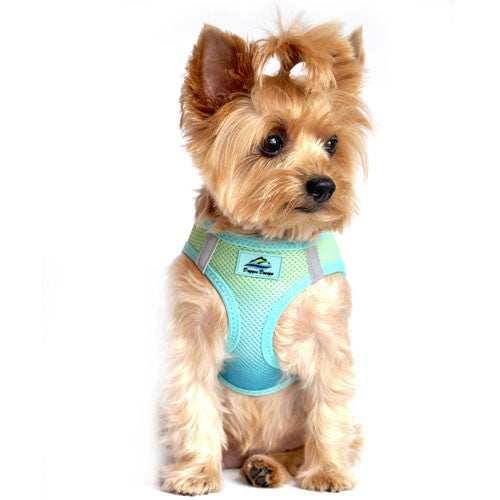 Doggie Design Ombre American River Choke Free Dog Harness — Aruba Blue on Dog