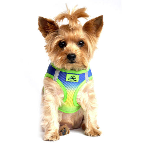 Doggie Design Ombre American River Choke Free Dog Harness — Cobalt Sport on Dog