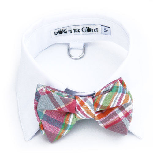 Dog In The Closet Whitw Shirt Collar with Pastel Madras Bow Tie
