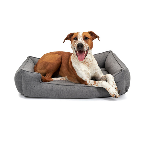 Jax & Bones Memory Foam Cuddler Orthopedic Dog Bed — Lark Graphite with Dog