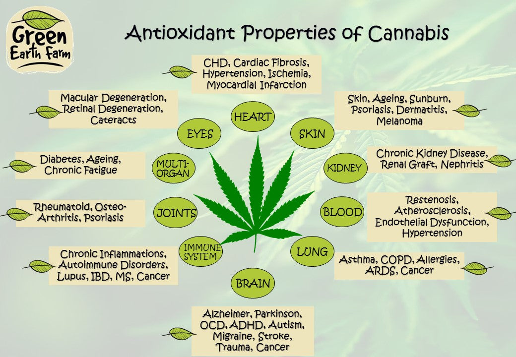 Green Earth Farm ~ Antioxidant Properties of Cannabis