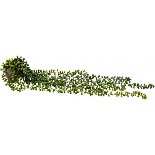 String of Pearls Vine Pot 10 Strands 62cm