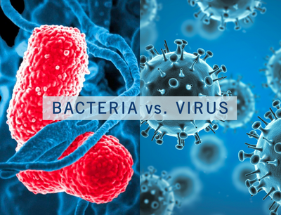 Bacteria vs Virus - from composition, to transmission