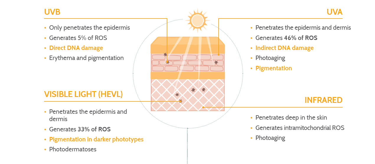 The effects of the solar radiation spectrum on skin