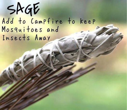 Large White Sage Smudge Stick