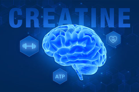 Creatine, The Brain and Body Performance Booster