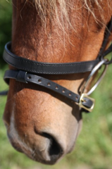 Bridle without a browband with Noseband with a flash