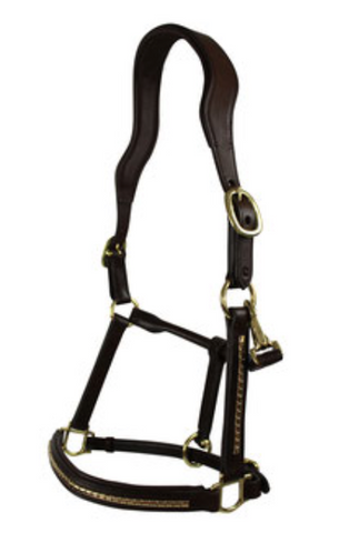 Brown Leather Halter with Gold detail