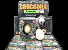 Growing Pet Egg ~ Crocodile