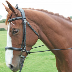 Bungee Training Reins - Saoirse Saddlery
