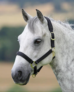 Adjustable Nylon Headcollar - Saoirse Saddlery