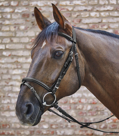 Star Basic Combined Bridle - Saoirse Saddlery