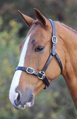 Fully Adjustable Leather Headcollar - Saoirse Saddlery