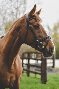 Equi-Sential Leather Bridle and Reins - Saoirse Saddlery