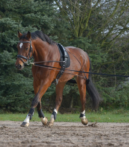 Lunging System - Saoirse Saddlery