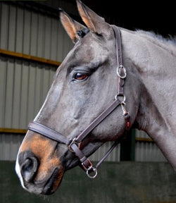 Whitaker 'Ready To Ride' Headcollar - Saoirse Saddlery