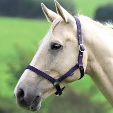 Nylon Headcollar - Saoirse Saddlery