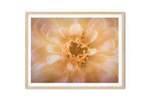 Soft Pink and Cream Fine Art Prints - Dream in Color Wall Art
