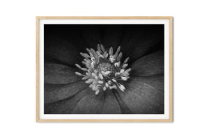 Black and White Fine Art Prints - Dream in Color Wall Art