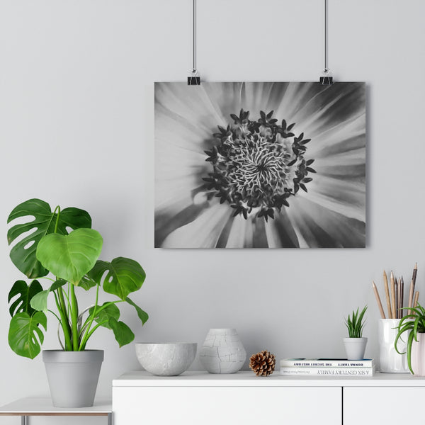 Starburst Zinnia Wall Art | Giclée Art Print in Black and White
