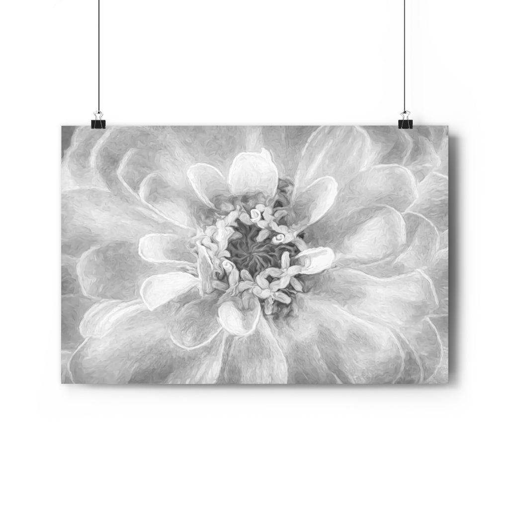 Peach Zinnia Wall Art - Giclée Fine Art Print in Black and White
