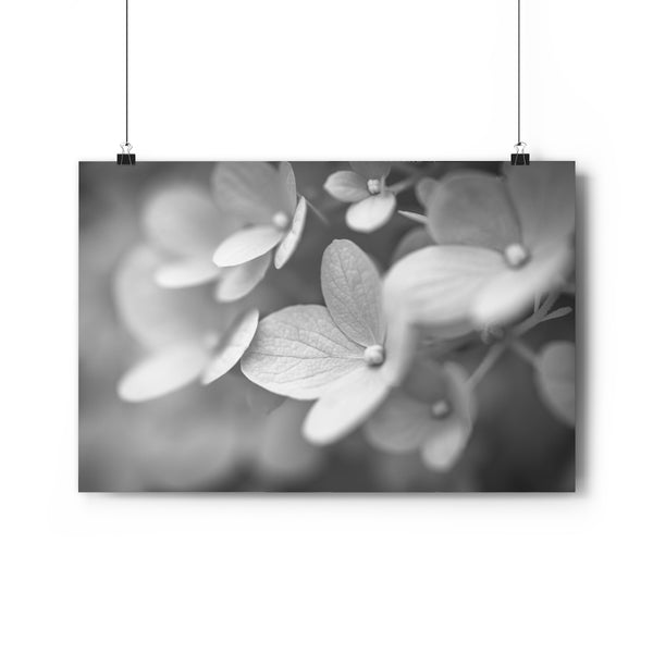 Hydrangea #2 Wall Art - Giclée Fine Art Print in Black and White