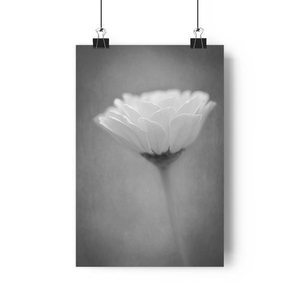 Pink Mist Zinnia Wall Art - Giclée Art Print in Black and White