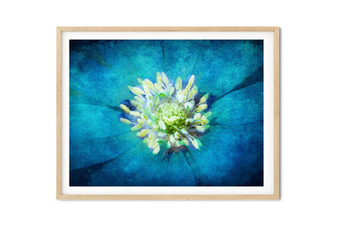 Watercolor Blue Grecian Windflower Floral Boho Wall Art - Giclée Art Print