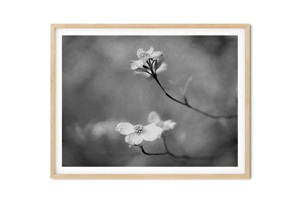 Dogwood Blooms Wall Art - Giclée Art Print in Black and White
