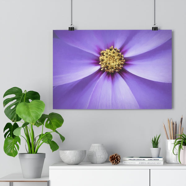 Star of the Show Lavender Cosmo | Floral Wall Art | Giclée Art Print